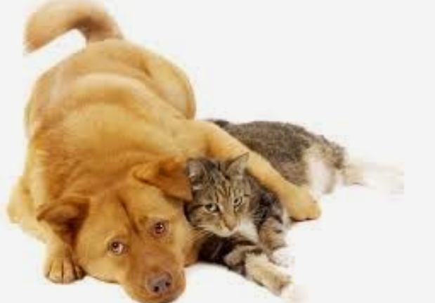 Flea Control For Dogs And Cats…