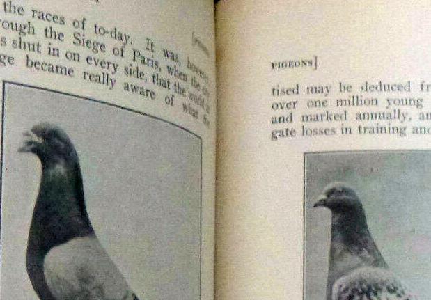 Racing Pigeon Books and DVDs